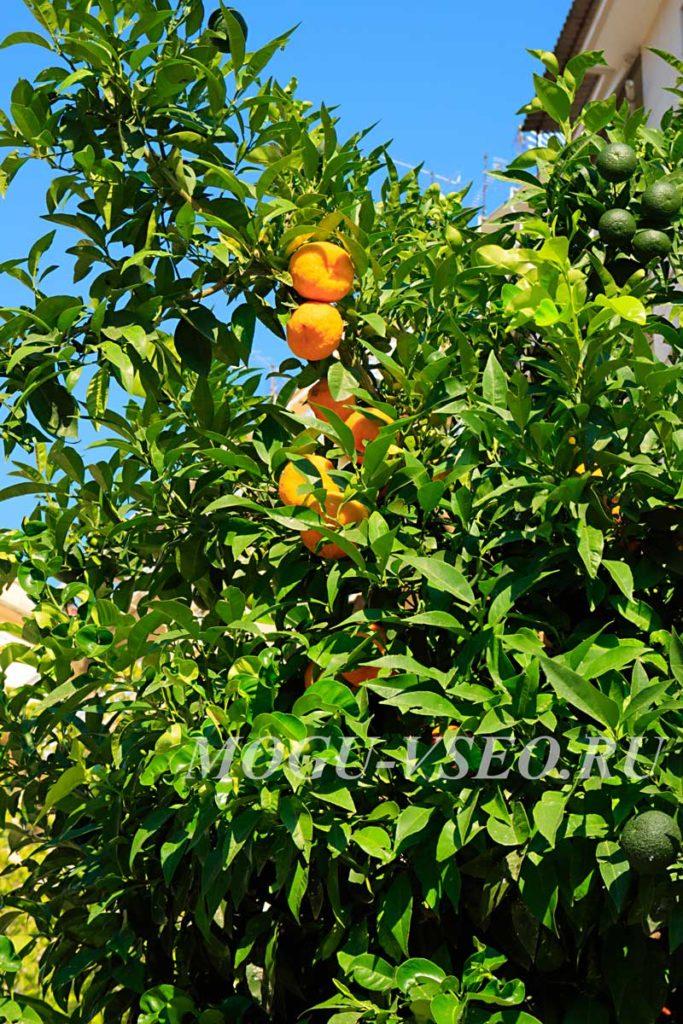 Салоники апельсины фото