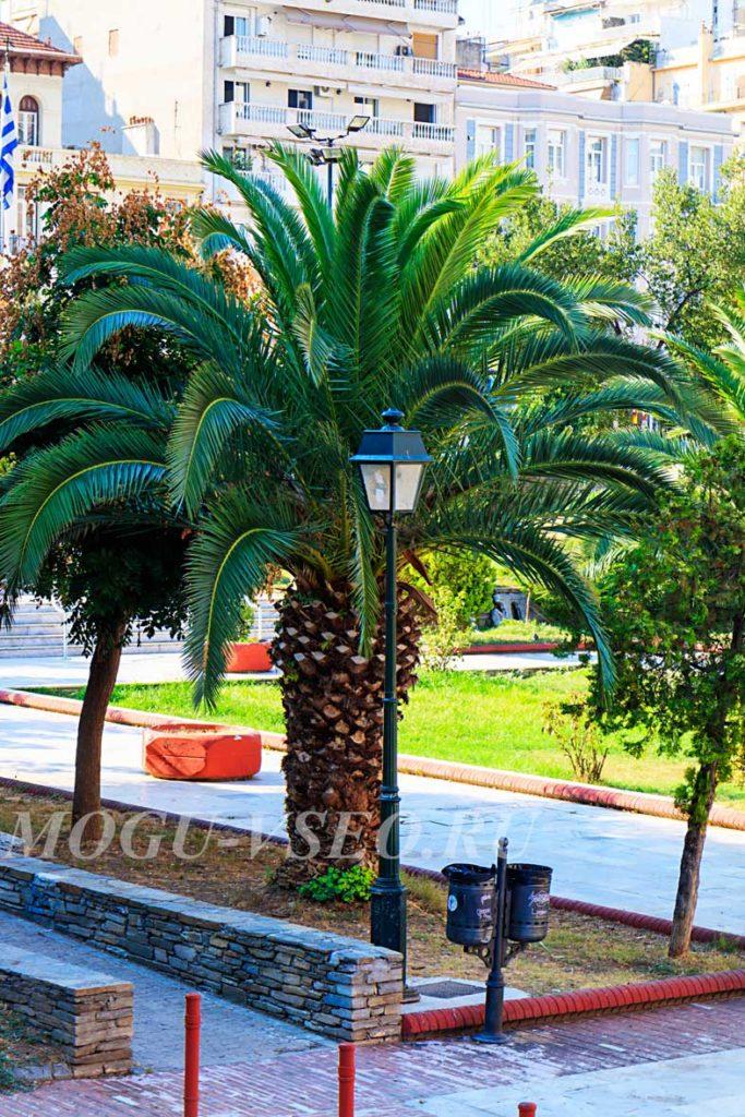 Салоники пальмы фото