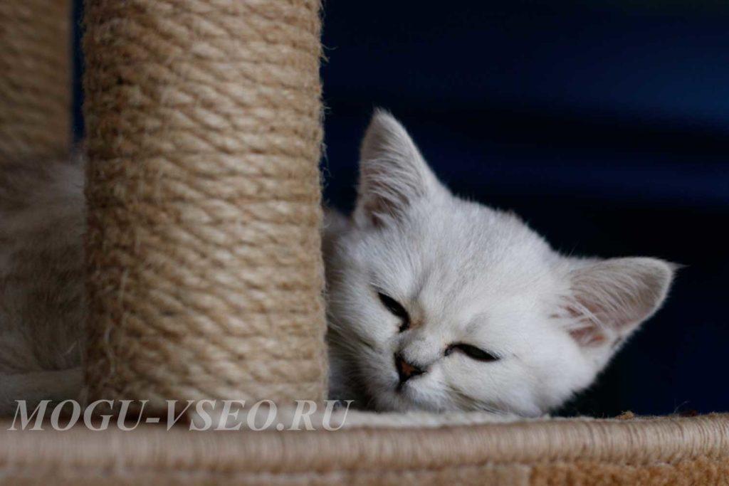котокафе спящий котенок фото