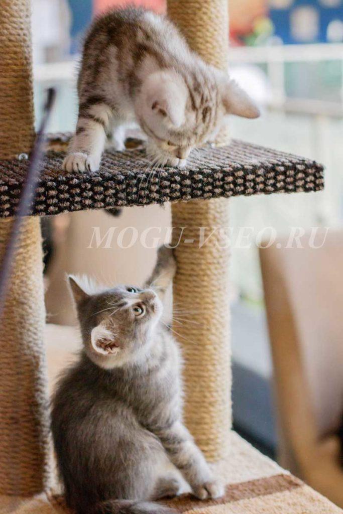 кошачье кафе играющие котята фото