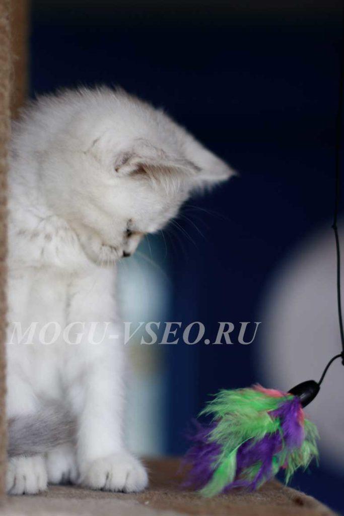 котокафе белый котенок фото