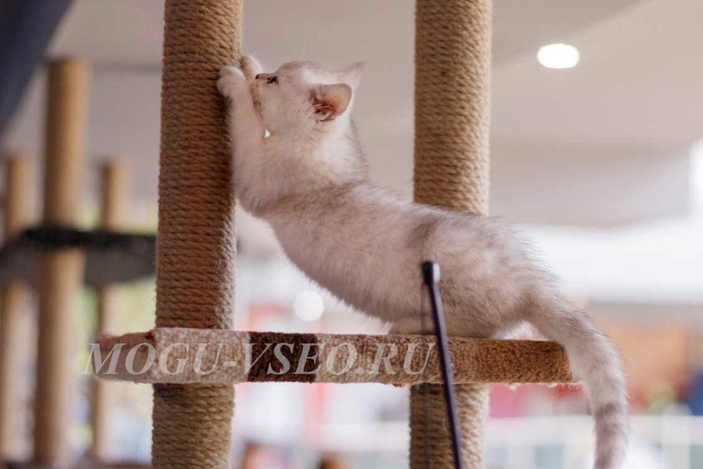 cats cafe котенок фото