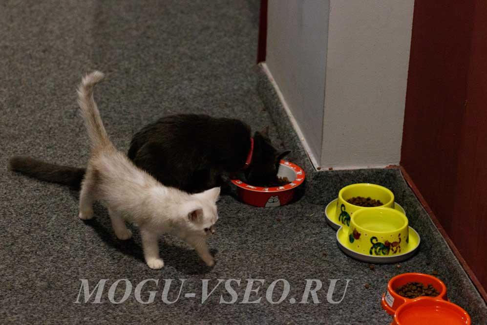 cats cafe фото