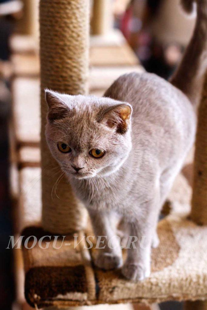cats cafe серый кот фото