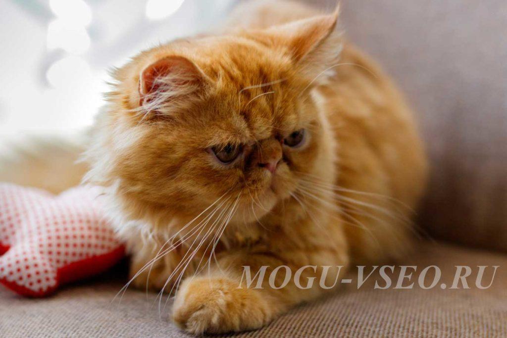 cats cafe рыжий кот фото