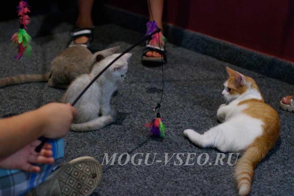 cats cafe кошки фото