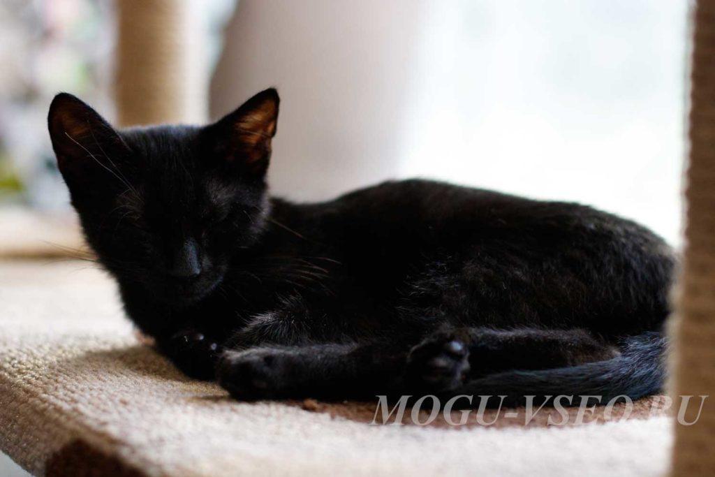 кошачье кафе черный котенок фото