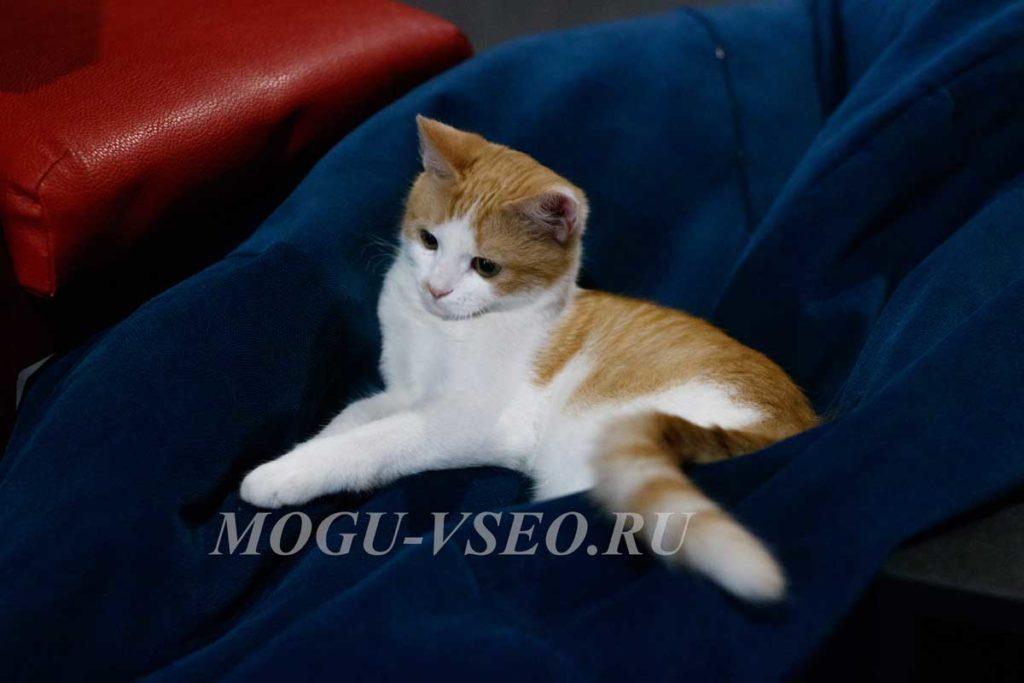 кошачье кафе кошка фото