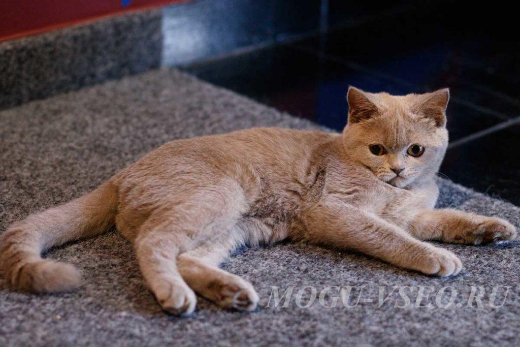 кошачье кафе котенок фото