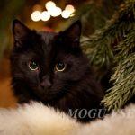 кот Мишаня фото